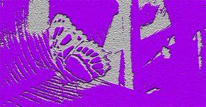 VlinderGrafisch